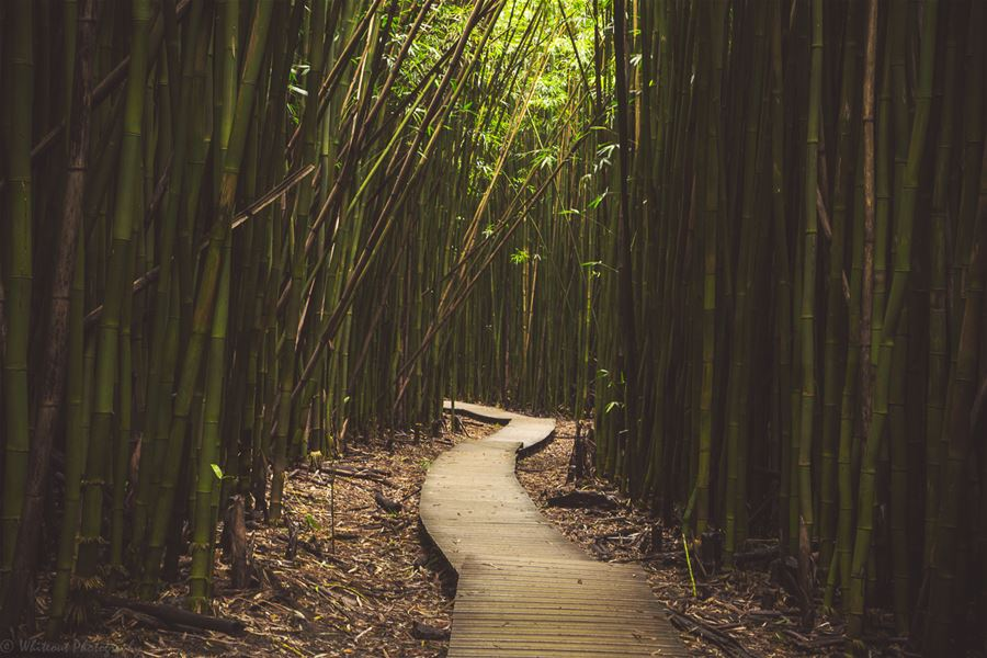 Category: Tranquility Photographer: Rob Esau Title: Bamboo Forest