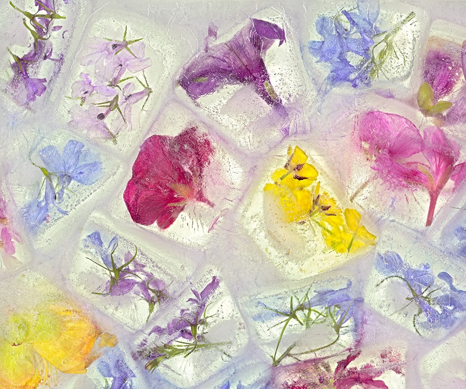 Flowers Cubed_20x24