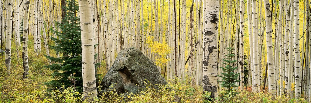 Rock-and-Aspen-Forest