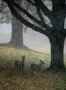 Letchworth-deer-michael reichmann