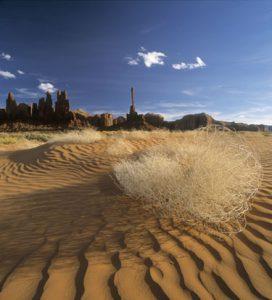 Tumbleweed Dunes - Michael Reichmann
