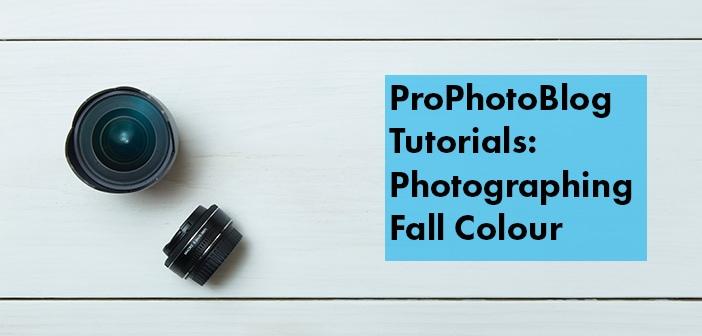 Vistek Tutorials - Photographing Fall Colour Cover