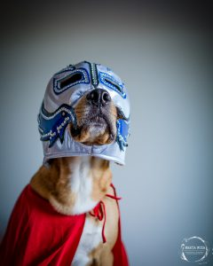 Dog in luchador mask and cape
