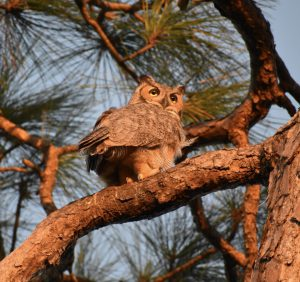 Owl standing on tree branch