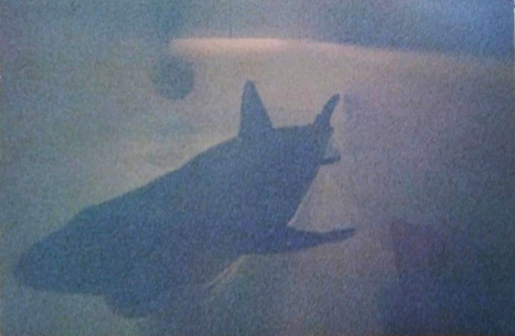Bathtub shark