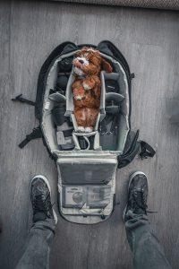 Dog in Camera Bag