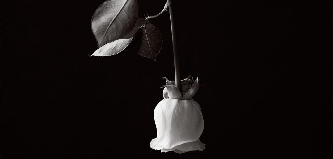 A Love Affair with Photography - Billie Chaisson